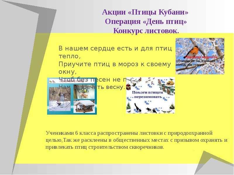 Акции «Птицы Кубани» Операция «День птиц» Конкурс листовок.