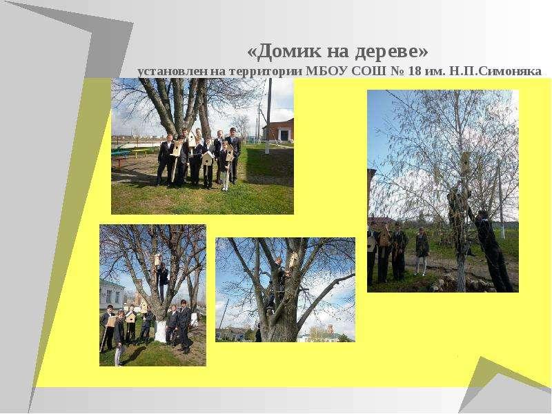 Муниципальный этап краевой экологической акции «Птицы Кубани». Операция «День птиц», слайд 7