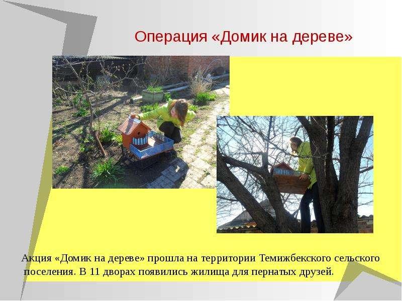 Операция «Домик на дереве»