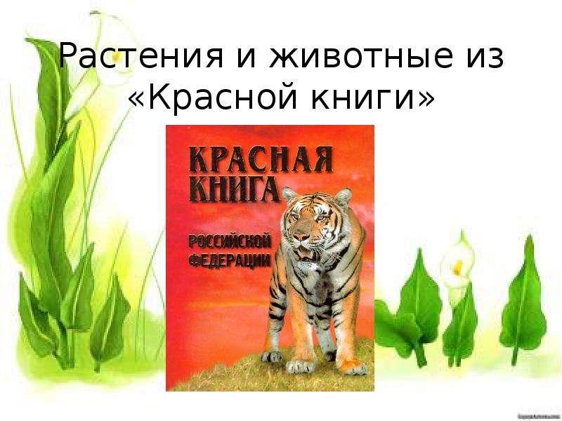 Красная книга картинки животных и растения