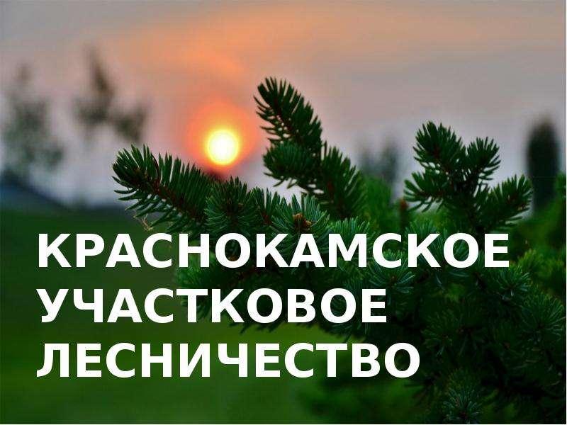 Презентация Краснокамское участковое лесничество