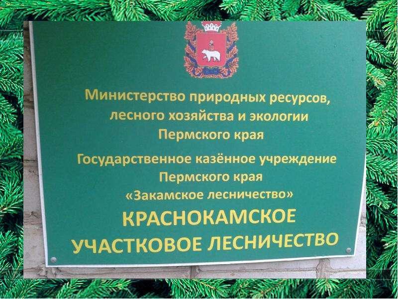 Краснокамское участковое лесничество, слайд 2