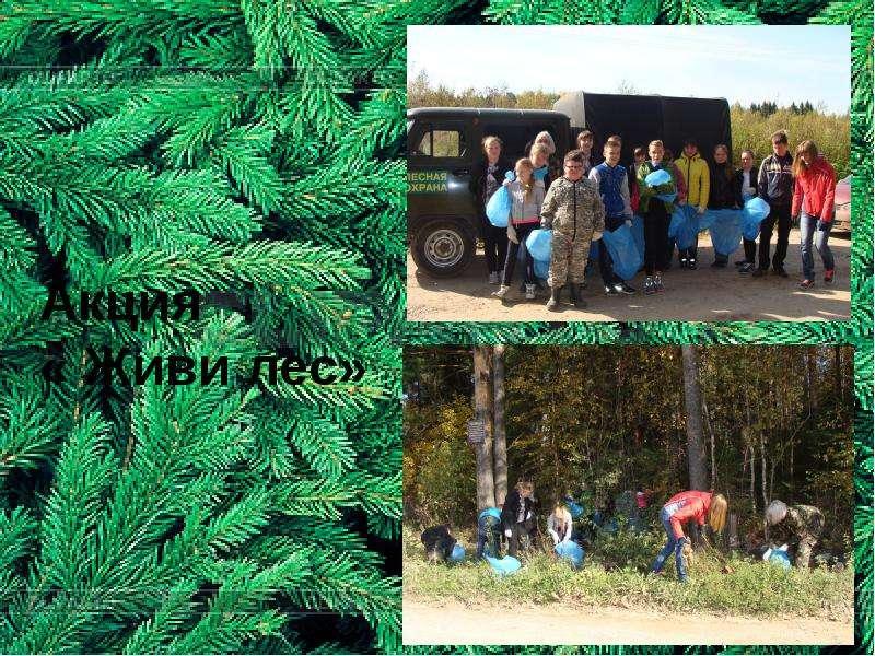 Акция « Живи лес»