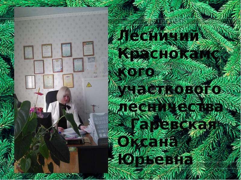 Лесничий Краснокамского участкового лесничества – Гаревская Оксана Юрьевна