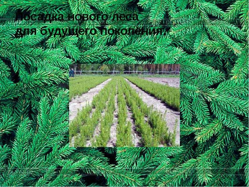 Посадка нового леса для будущего поколения.