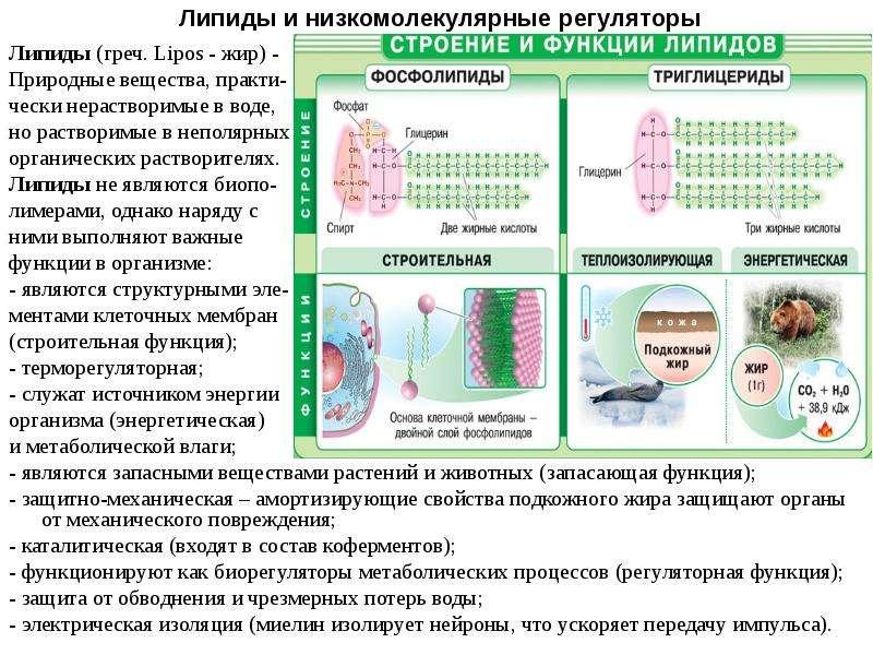 Презентация Липиды и низкомолекулярные регуляторы