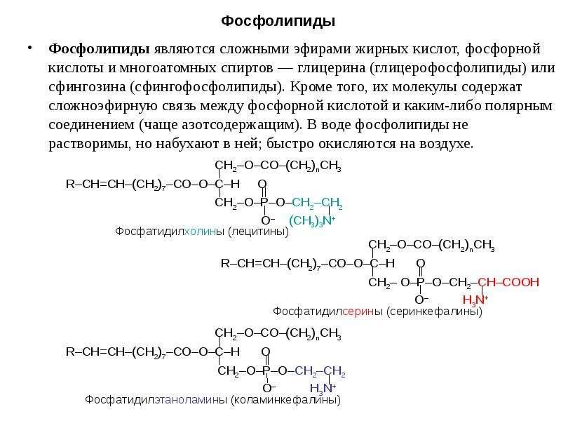 Фосфолипиды Фосфолипиды являются сложными эфирами жирных кислот, фосфорной кислоты и многоатомных сп