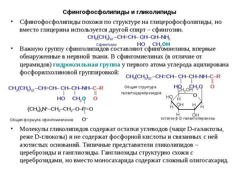 Сфингофосфолипиды и гликолипиды Сфингофосфолипиды похожи по структуре на глицерофосфолипиды, но вмес