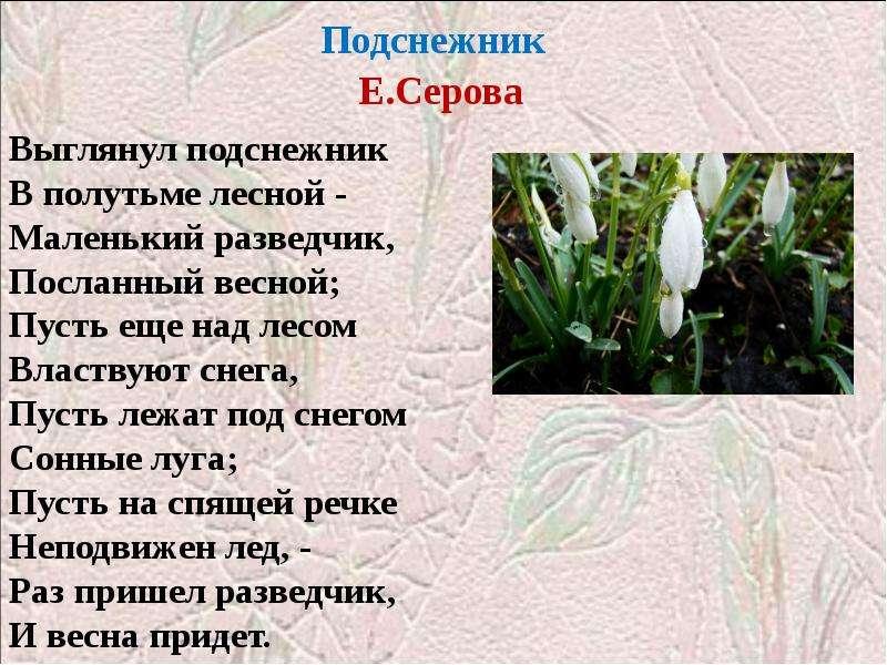 Подснежник Е. Серова