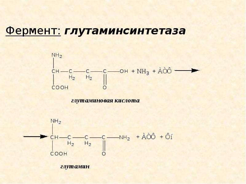 Метаболизм белков и аминокислот, слайд 13
