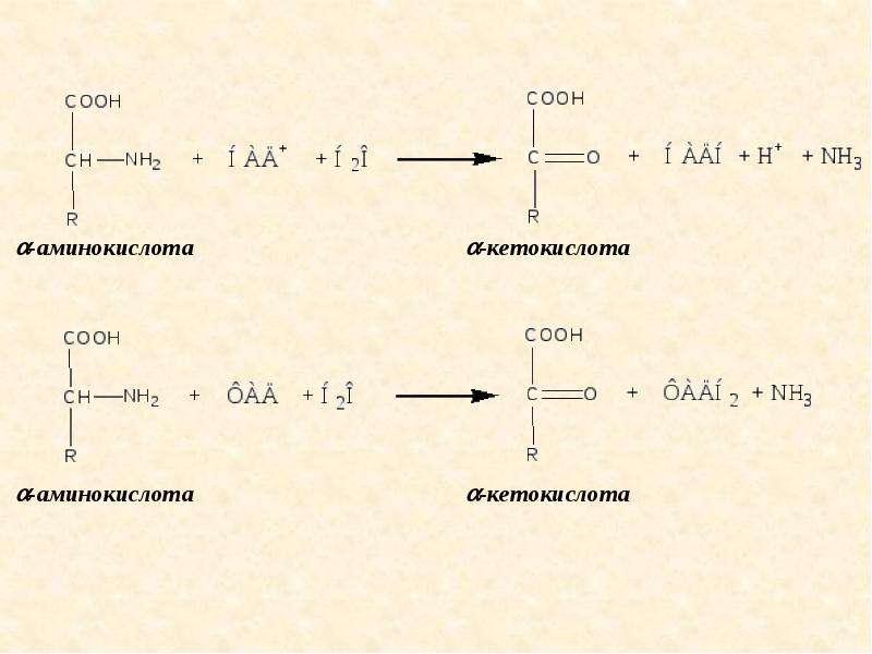 Метаболизм белков и аминокислот, слайд 7