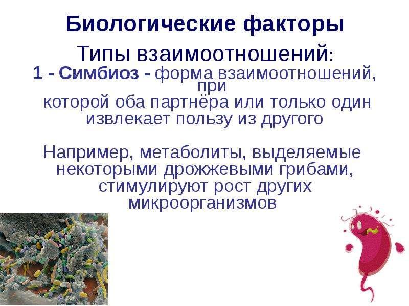 Биологические факторы Биологические факторы Типы взаимоотношений: 1 - Симбиоз - форма взаимоотношени