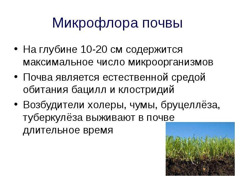 Микрофлора почвы На глубине 10-20 см содержится максимальное число микроорганизмов Почва является ес