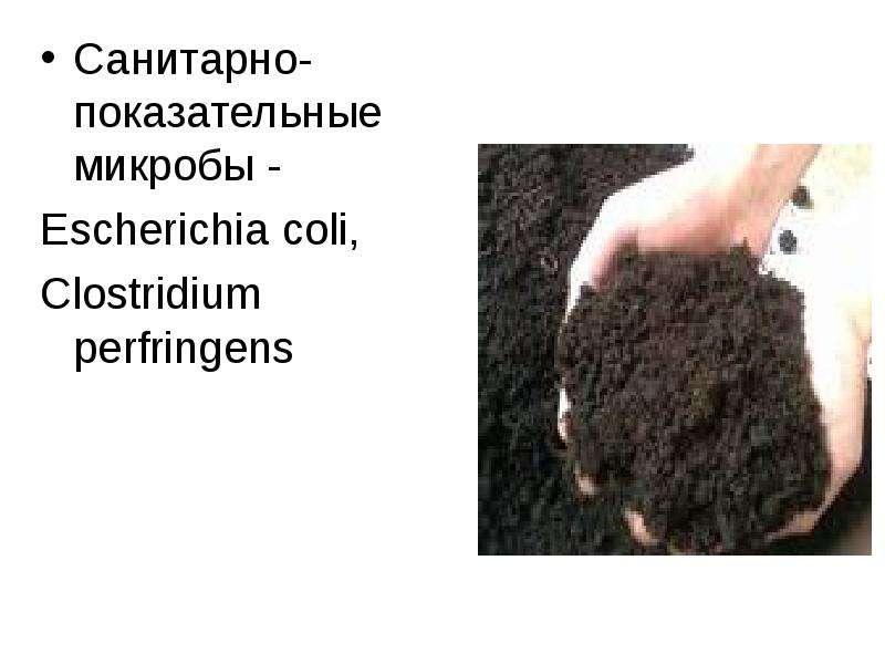Санитарно-показательные микробы - Санитарно-показательные микробы - Escheriсhia coli, Clostridium pe