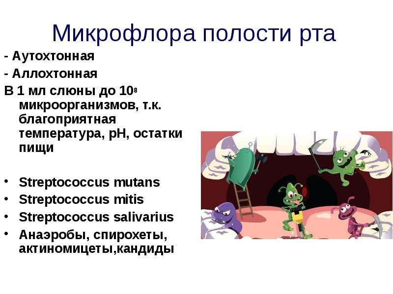 Микрофлора полости рта - Аутохтонная - Аллохтонная В 1 мл слюны до 108 микроорганизмов, т. к. благоп