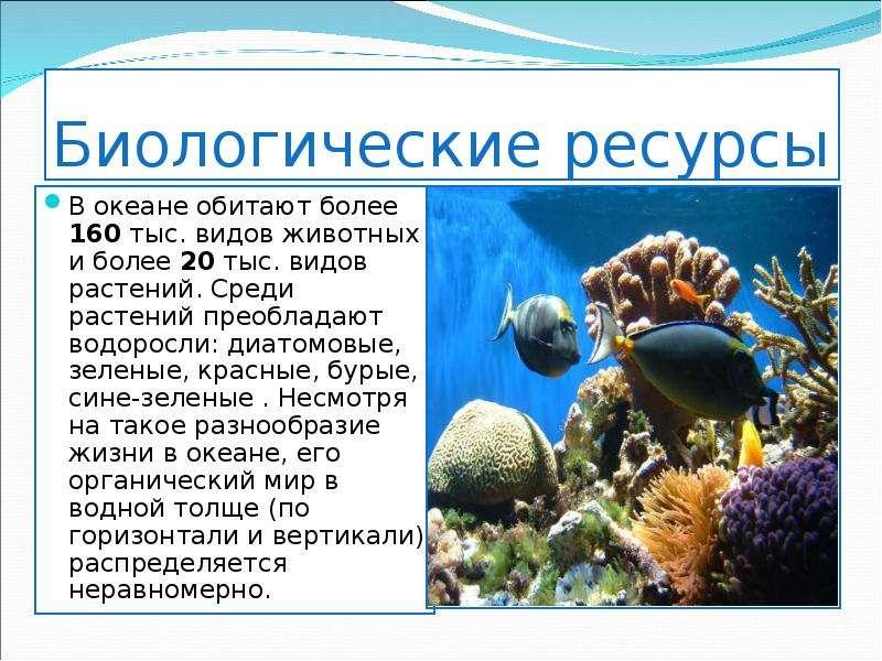 Биологические ресурсы В океане обитают более 160 тыс. видов животных и более 20 тыс. видов растений.