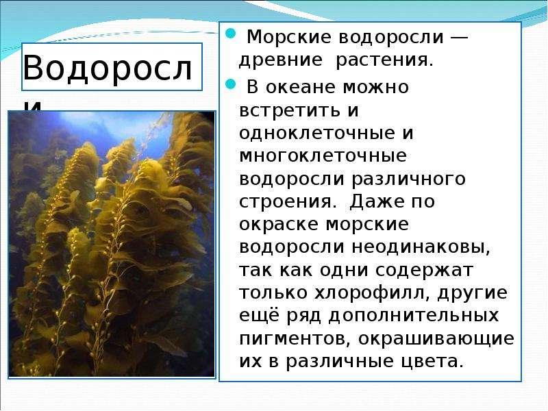 Водоросли Морские водоросли — древние растения. В океане можно встретить и одноклеточные и многоклет