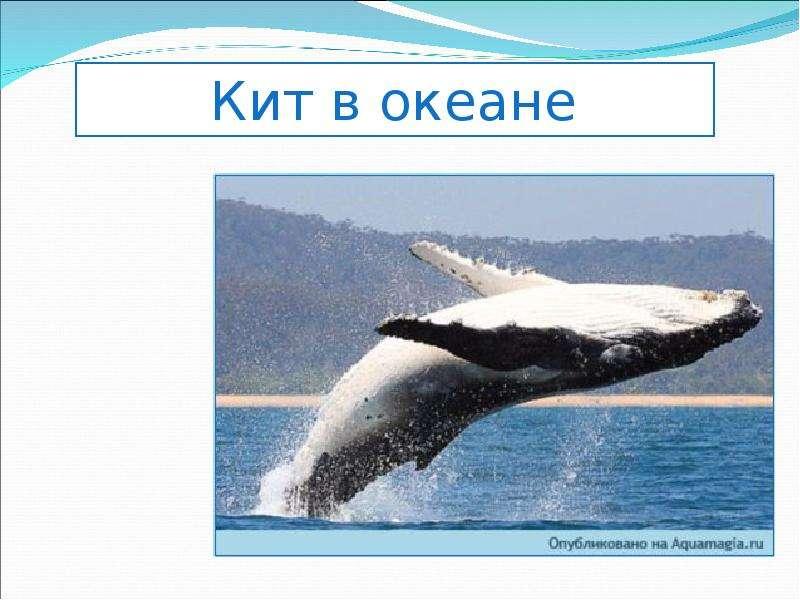Ресурсы Мирового океана и возможности их использования, слайд 19