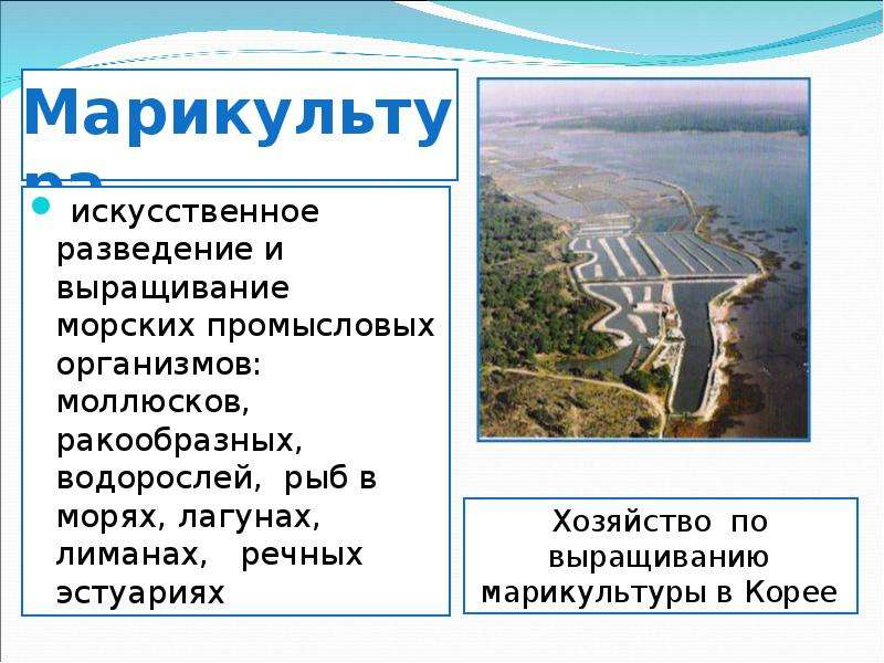 Марикультура искусственное разведение и выращивание морских промысловых организмов: моллюсков, ракоо