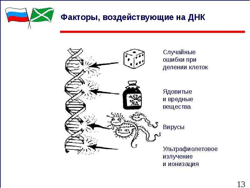 Факторы, воздействующие на ДНК