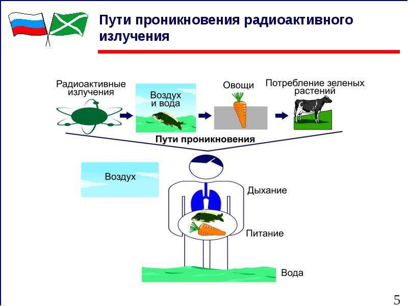 Пути проникновения радиоактивного излучения