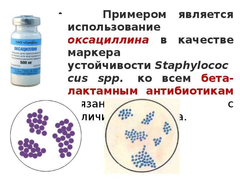Примером является использование оксациллина в качестве маркера устойчивости Staphylococcus spp. ко в