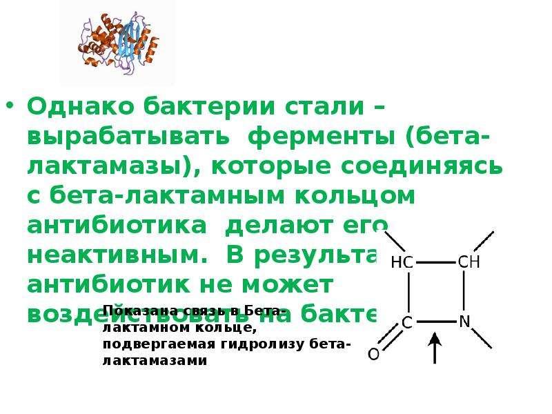 Однако бактерии стали – вырабатывать ферменты (бета-лактамазы), которые соединяясь с бета-лактамным