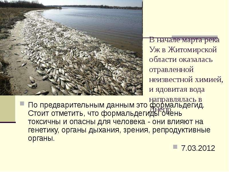 В начале марта река Уж в Житомирской области оказалась отравленной неизвестной химией, и ядовитая во
