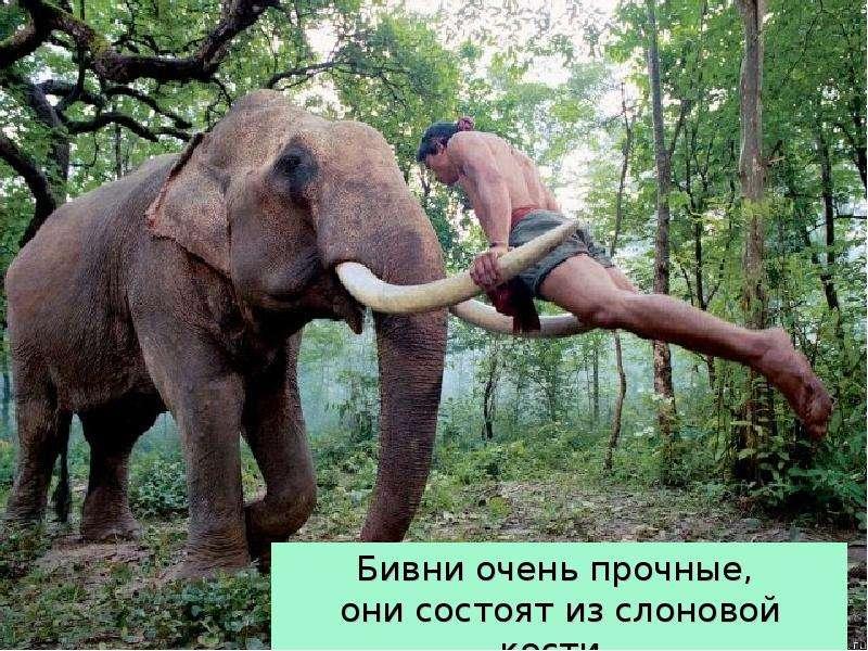 Крупные наземные животные слоны, слайд 11