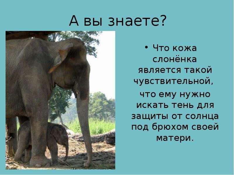 А вы знаете? Что кожа слонёнка является такой чувствительной, что ему нужно искать тень для защиты о