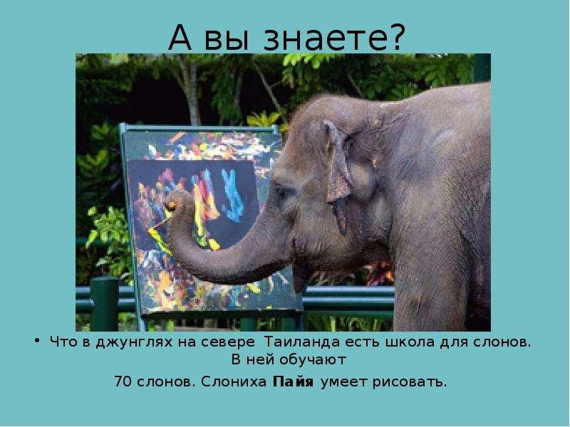 А вы знаете? Что в джунглях на севере Таиланда есть школа для слонов. В ней обучают 70 слонов. Слони