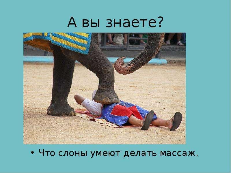 А вы знаете? Что слоны умеют делать массаж.