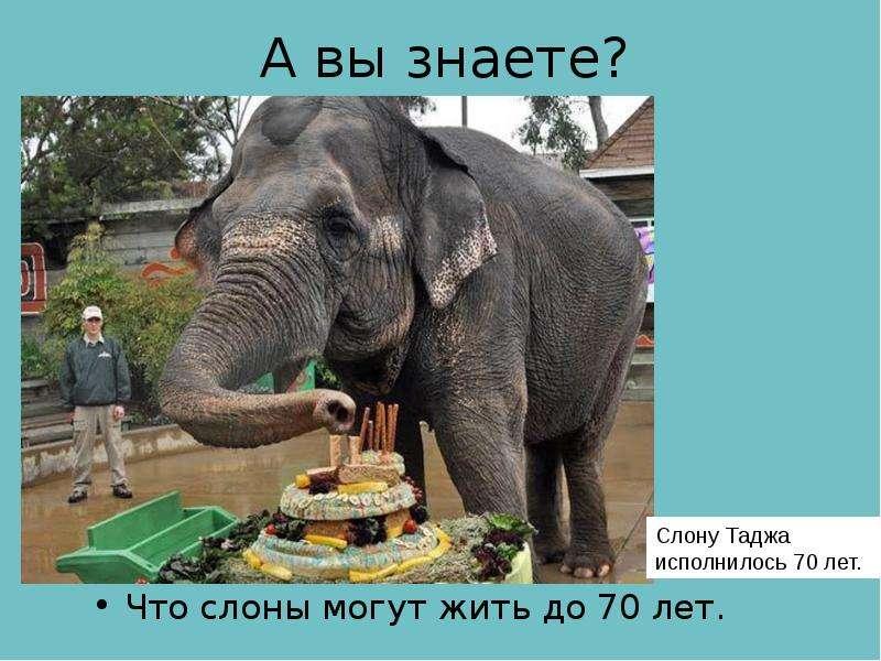 А вы знаете? Что слоны могут жить до 70 лет.