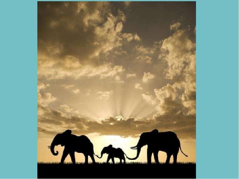 Крупные наземные животные слоны, слайд 38