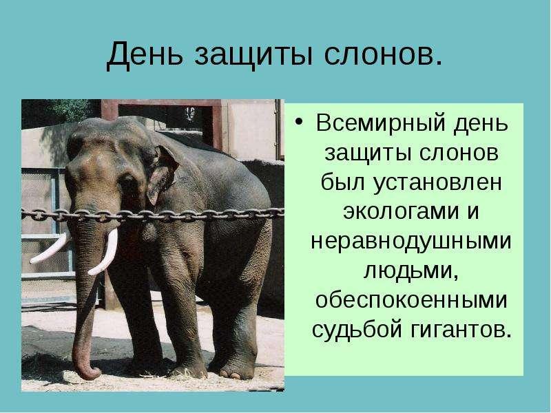 День защиты слонов. Всемирный день защиты слонов был установлен экологами и неравнодушными людьми, о