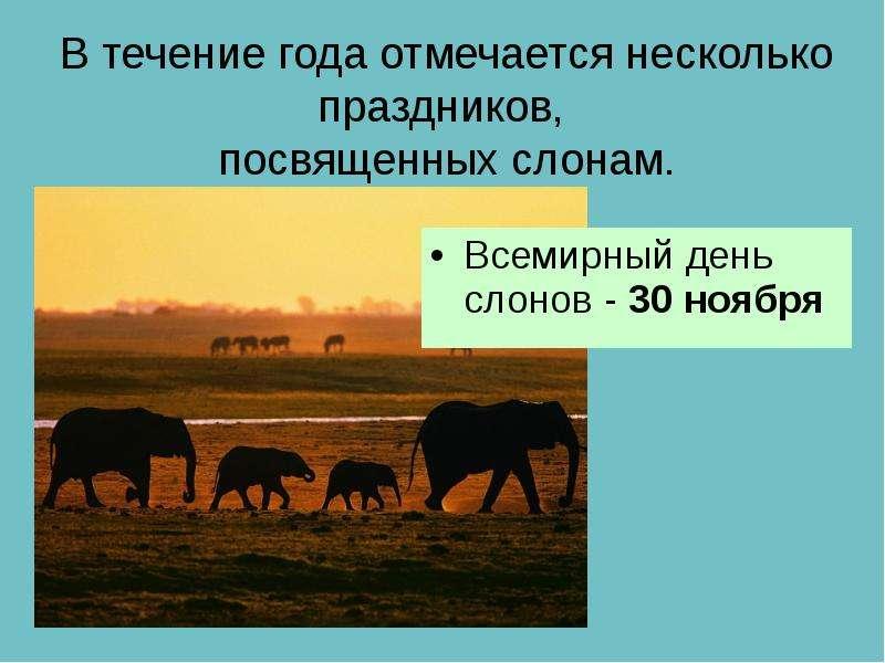 В течение года отмечается несколько праздников, посвященных слонам. Всемирный день слонов - 30 ноябр