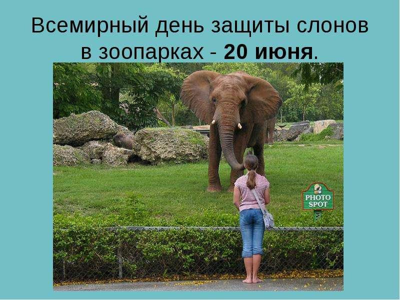 Всемирный день защиты слонов в зоопарках - 20 июня.