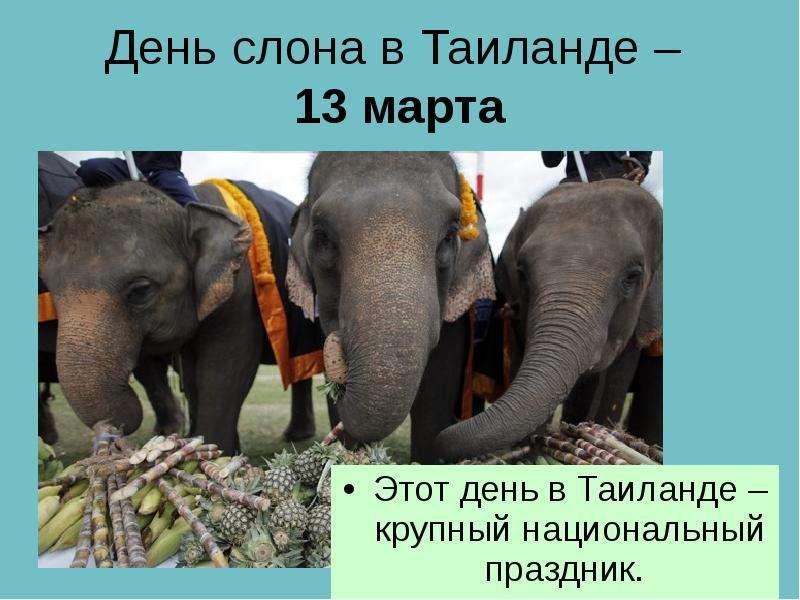 День слона в Таиланде – 13 марта Этот день в Таиланде – крупный национальный праздник.