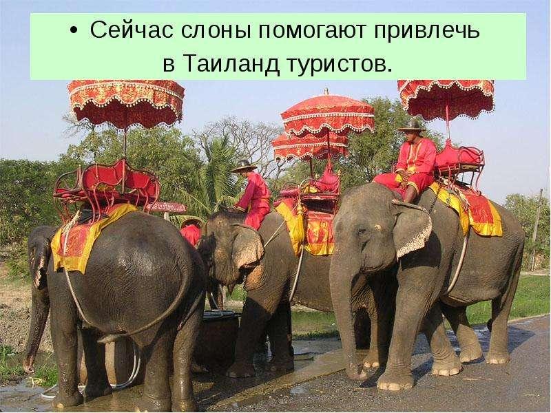 Сейчас слоны помогают привлечь Сейчас слоны помогают привлечь в Таиланд туристов.