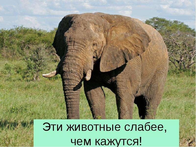 Эти животные слабее, чем кажутся!