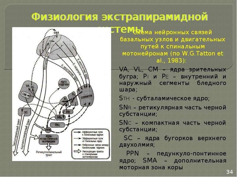 Двигательная система. Признаки центрального и периферического параличей. Методы исследования, слайд 34