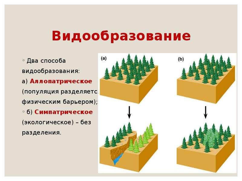 Видообразование Два способа видообразования: а) Аллопатрическое (популяция разделяется физическим ба