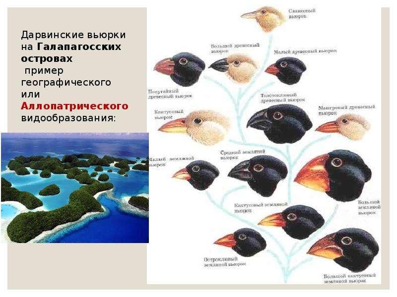 Экологический критерий вида. Экологические закономерности, связанные с питанием животных, слайд 12