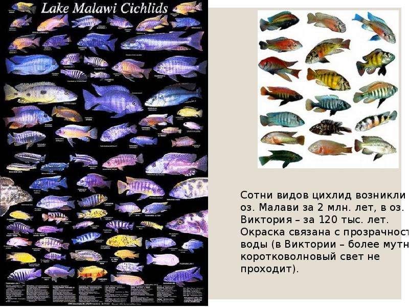 Экологический критерий вида. Экологические закономерности, связанные с питанием животных, слайд 14