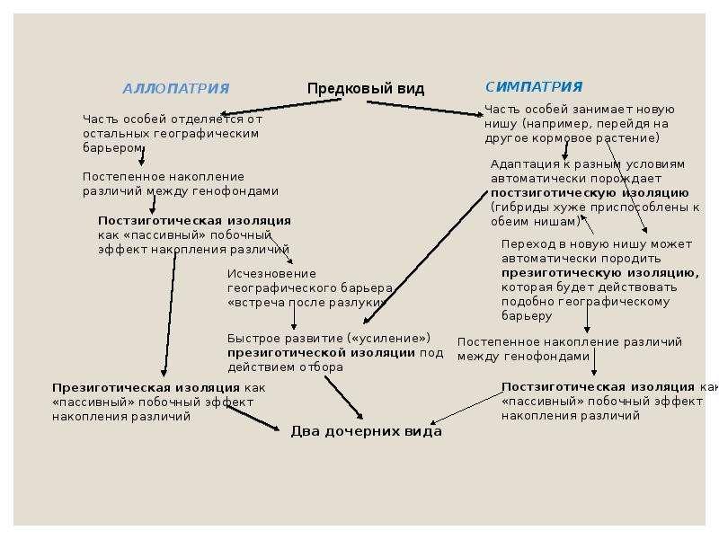 Экологический критерий вида. Экологические закономерности, связанные с питанием животных, слайд 15