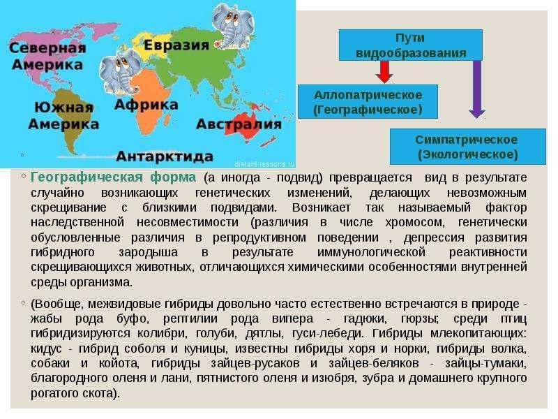 Географическая форма (а иногда - подвид) превращается вид в результате случайно возникающих генетиче