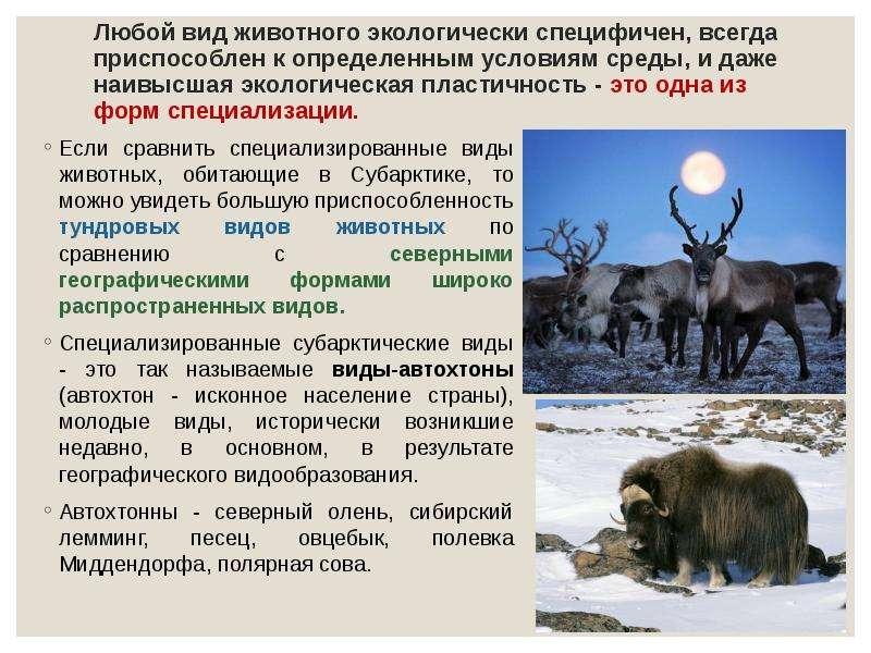 Любой вид животного экологически специфичен, всегда приспособлен к определенным условиям среды, и да