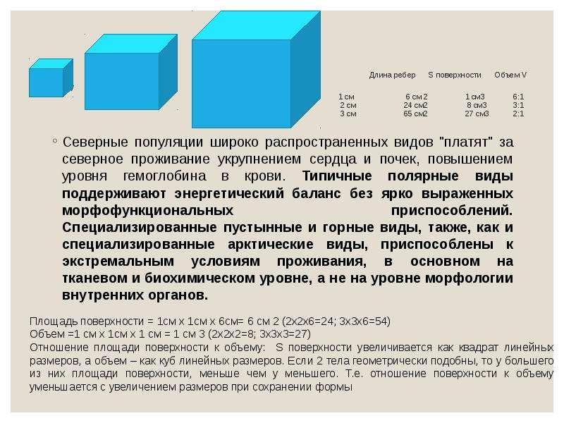 Длина ребер S поверхности Объем V S/V 1 cм 6 см 2 1 см3 6:1 2 см 24 см2 8 см3 3:1 3 см 65 см2 27 см3