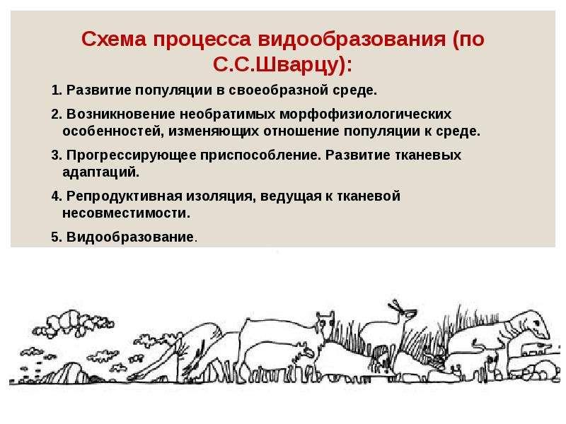 Схема процесса видообразования (по С. С. Шварцу): 1. Развитие популяции в своеобразной среде. 2. Воз
