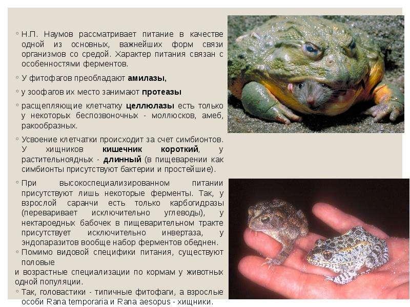Н. П. Наумов рассматривает питание в качестве одной из основных, важнейших форм связи организмов со